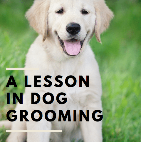 A lesson in dog grooming