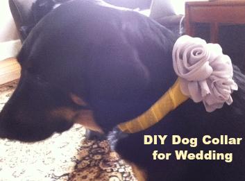 DIY Dog Collar for Wedding