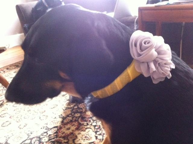 diy wedding collar for dogs