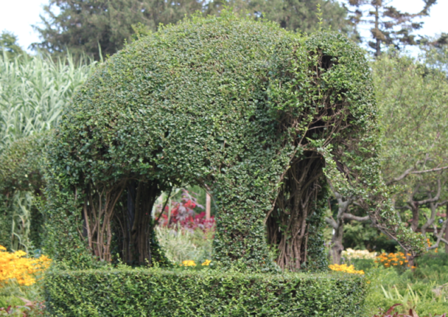 Elephant made out of Bushes