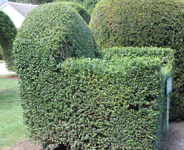 Chair made out of Bushes
