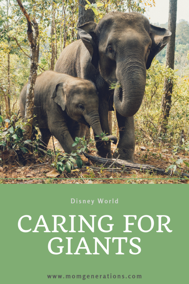 Caring for Giants Disney World