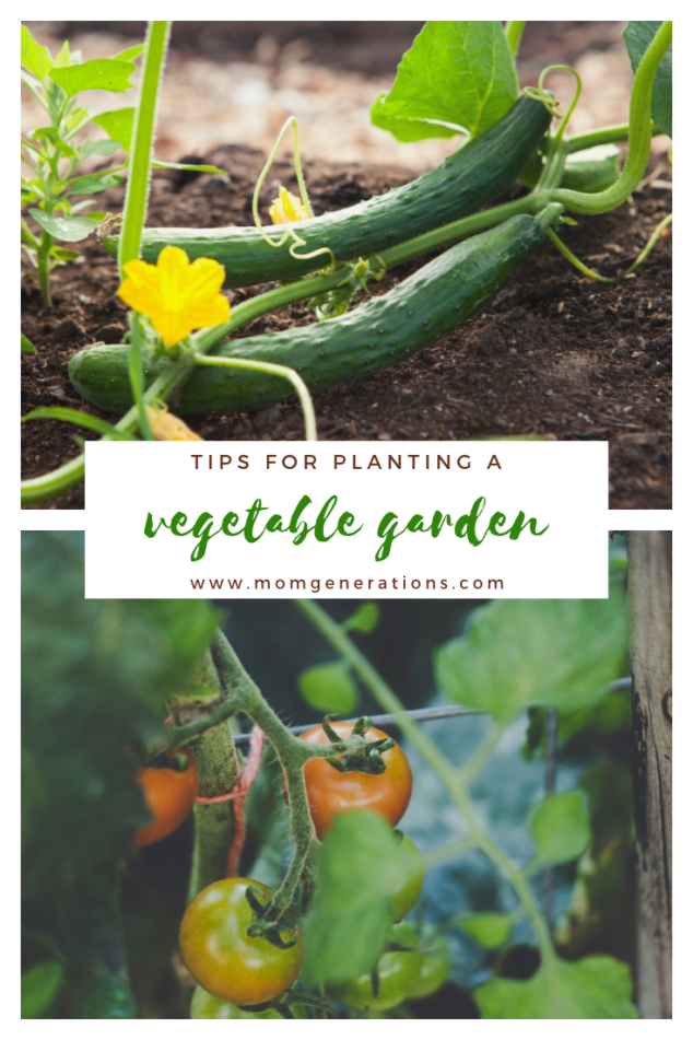 Spring Vegetable Garden - How to Start