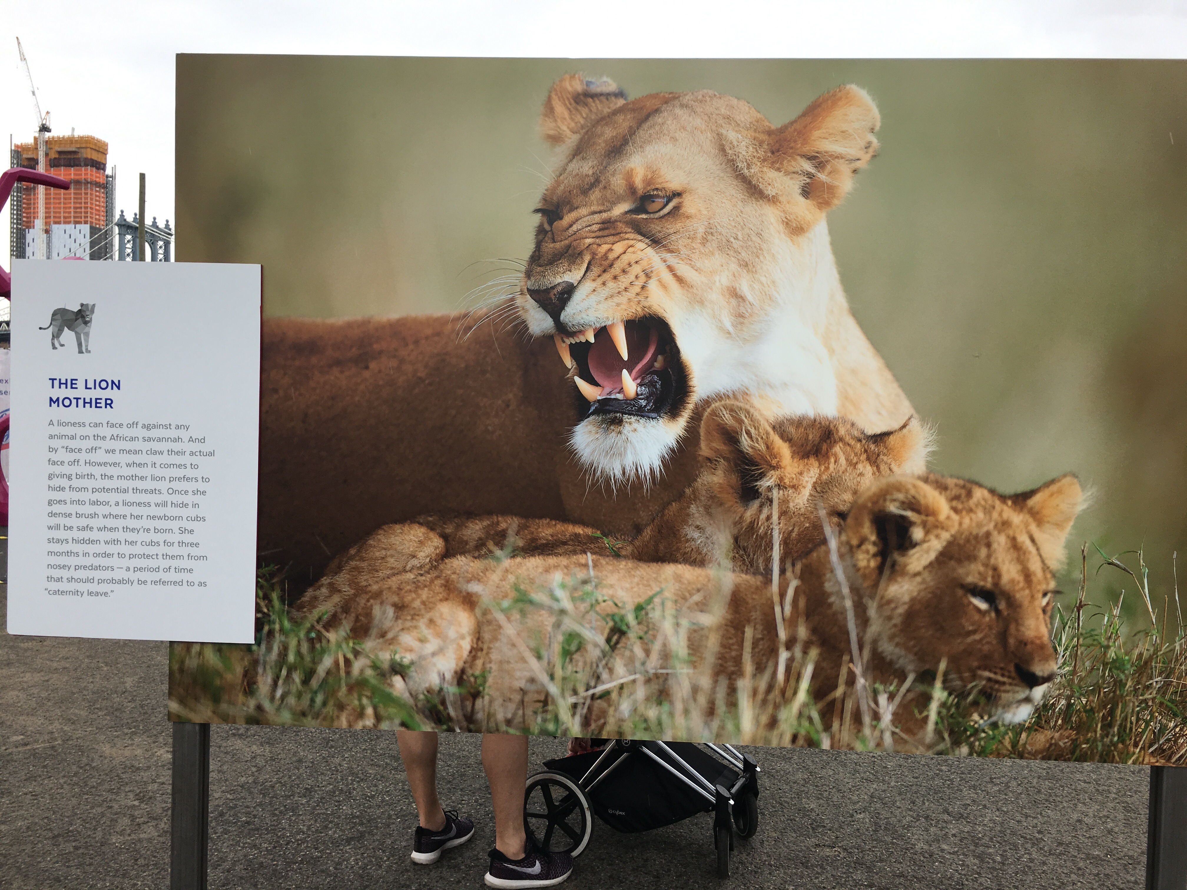 The Protect Like a Mother exhibit features plaques that detail how different animal moms protect their kids.
