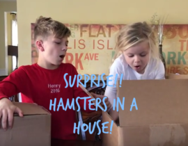 Hamsters in a House Toy Review