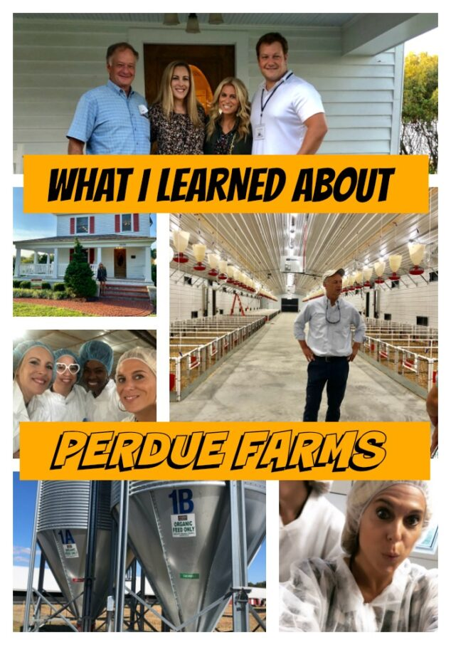 Perdue Farms Experience