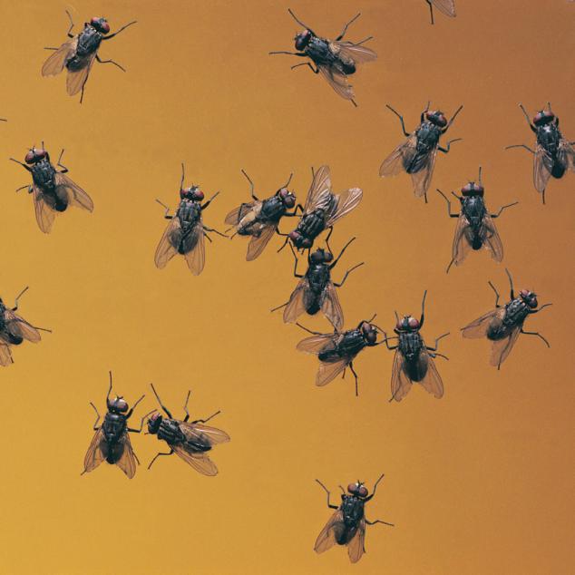 Easy Ways to Get Rid of Fruit Flies