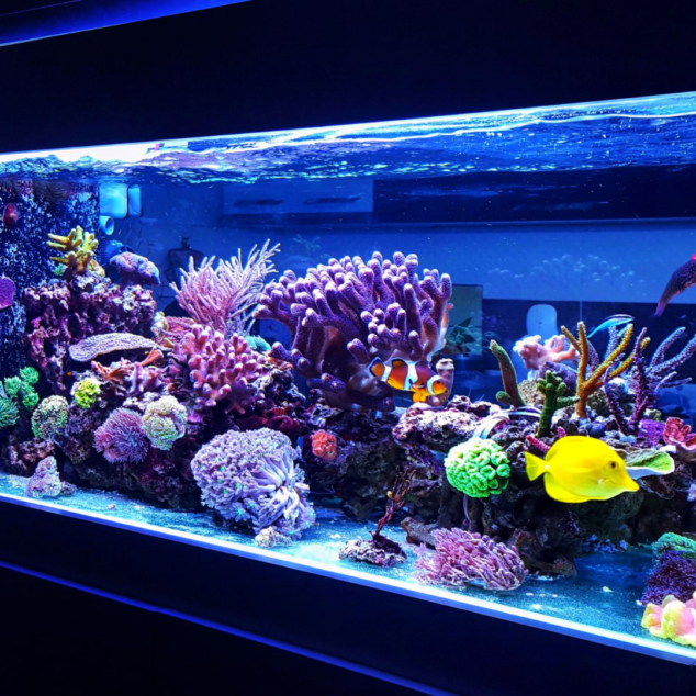 how to clean a fish tank